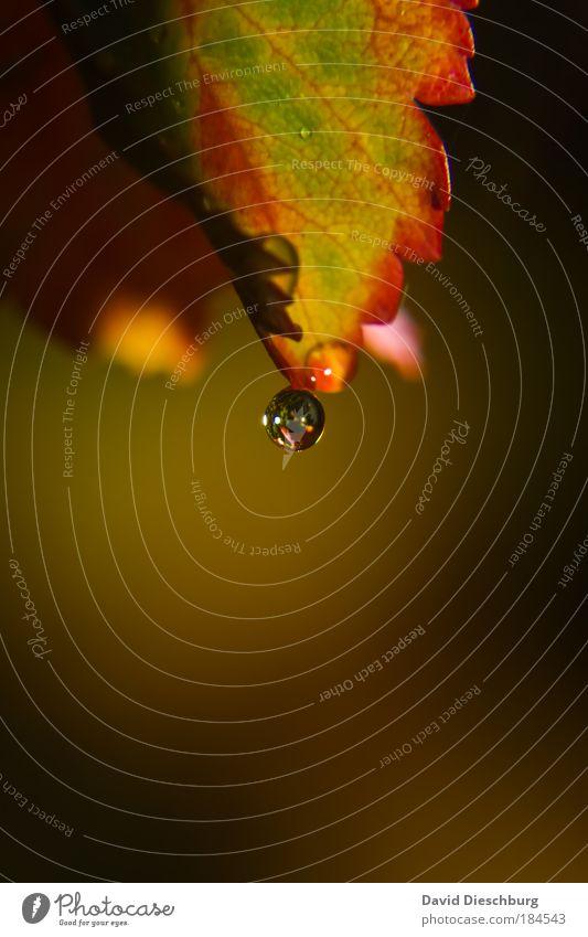 Herbstperle Farbfoto Außenaufnahme Nahaufnahme Detailaufnahme Makroaufnahme Tag Licht Schatten Kontrast Reflexion & Spiegelung Lichterscheinung Natur Pflanze