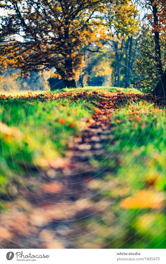 Pfad Umwelt Natur Vergänglichkeit Wege & Pfade Pfadfinder Lebenslauf Entscheidung Herbst herbstlich Herbstlaub Herbstbeginn Nordic Walking Erholung
