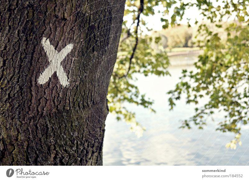 Erwählt Natur Pflanze Wasser Sommer Sonne Baum Landschaft Umwelt Herbst Frühling Holz See Schilder & Markierungen Ast Schönes Wetter Buchstaben