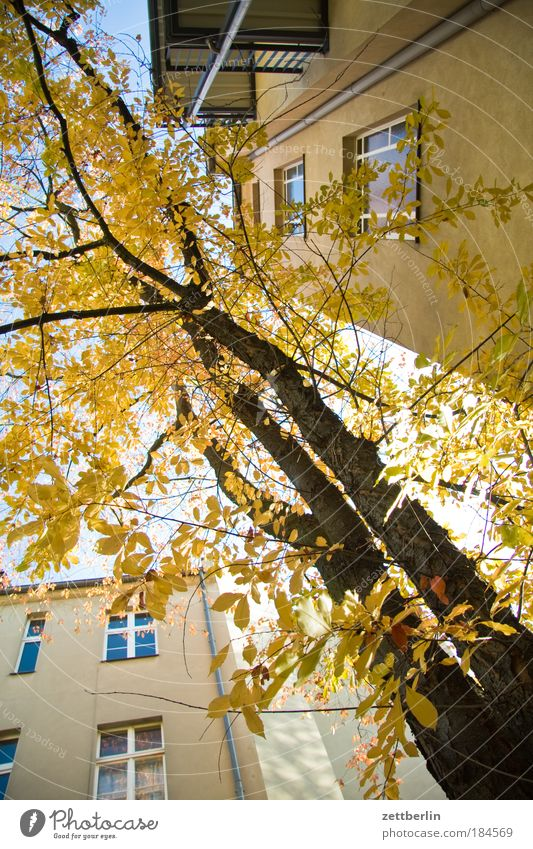 Oktober Baum Blatt Haus Herbst Fenster Gold Etage Jahreszeiten Baumstamm Hinterhof Mieter Herbstlaub Vermieter