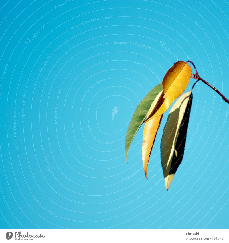 Schöner Herbst Natur Himmel Baum blau Pflanze Freude Blatt Luft Zufriedenheit Wetter Umwelt Lebensfreude Schönes Wetter Wolkenloser Himmel