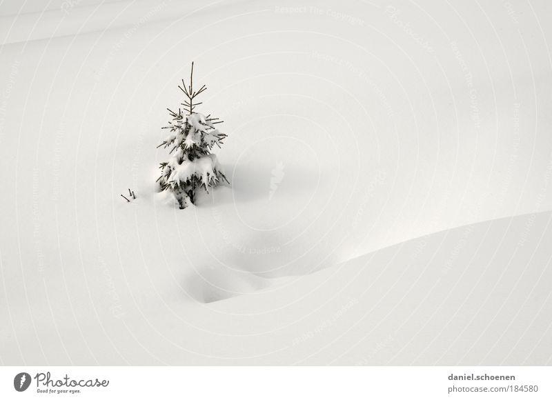 o Tannenbaum weiß Baum Ferien & Urlaub & Reisen Winter Schnee hell Eis Jahreszeiten frisch Frost rein Winterurlaub Pulverschnee