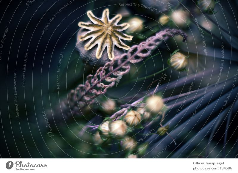 * Farbfoto Innenaufnahme Menschenleer Textfreiraum links Textfreiraum rechts Hintergrund neutral Schwache Tiefenschärfe Pflanze Gras Hanf Blumenstrauß