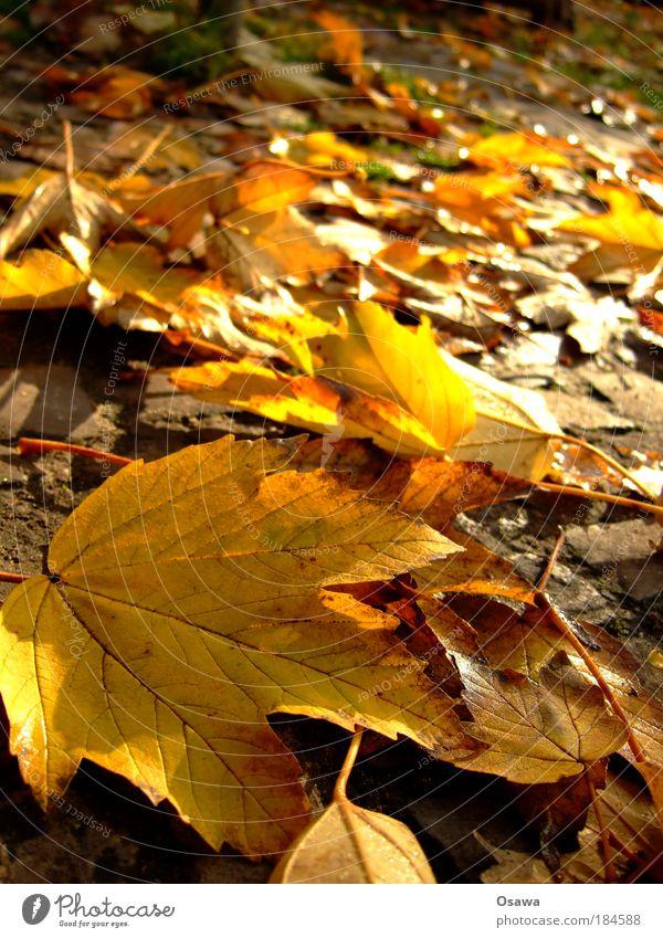 Herbstlaub Blatt Makroaufnahme Nahaufnahme Schwache Tiefenschärfe gelb orange Indian Summer Sonne Oktober gold goldener Oktober Hochformat Außenaufnahme