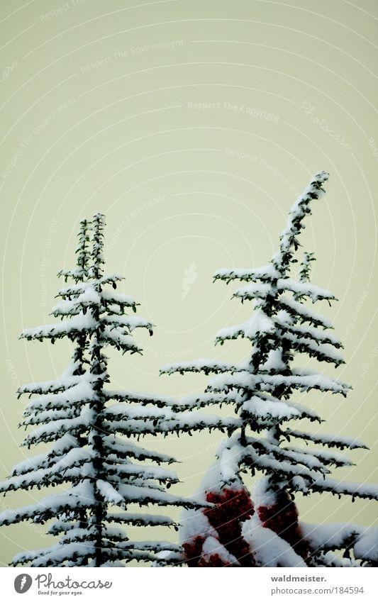 Sträucher im Schnee Farbfoto Außenaufnahme Park ästhetisch Winter