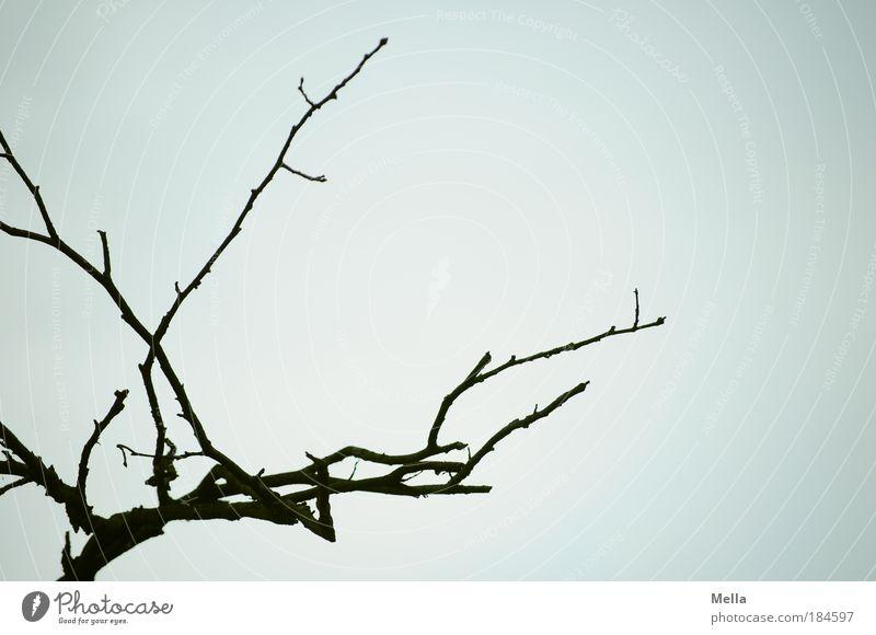 Weißkopfseeadler, gerade weggeflogen* Himmel Baum Pflanze Winter Herbst grau Umwelt trist Ast kahl trüb dehydrieren