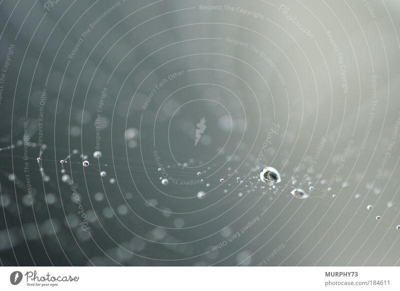 Gefangener Tau oder wenn Spinnen schwimmen lernen II Natur Wasser weiß grau Umwelt Wassertropfen Sicherheit Netzwerk Tropfen Netz Mitte silber gefangen Muster Spinne Spinnennetz