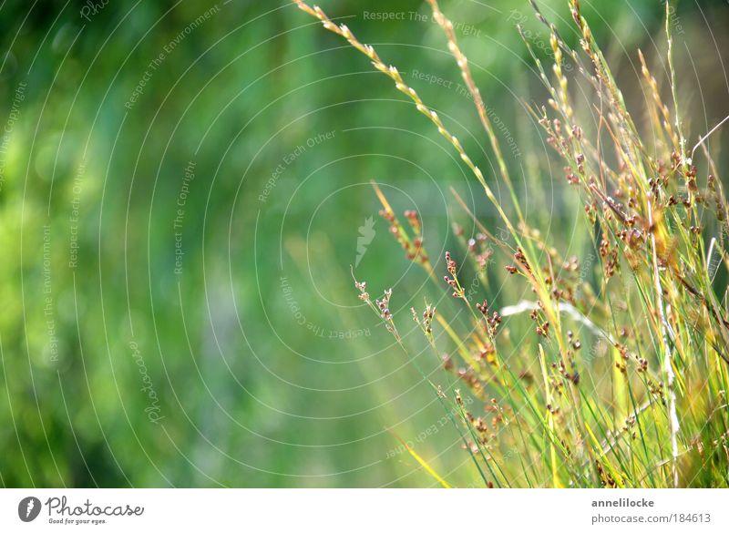 Sommer an der Spree aus der Liegewiese-Perspektive Natur grün Pflanze Ferien & Urlaub & Reisen Blatt Erholung Wiese Landschaft Umwelt Gras Park Hintergrundbild