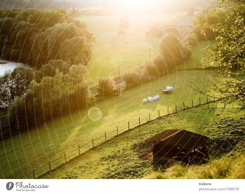 Murtalradweg Natur schön Sommer Erholung Landschaft ruhig Wiese natürlich Zeit Freiheit Stimmung Zufriedenheit Feld Freizeit & Hobby Tourismus gold
