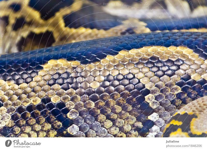 Tier Haut Schutz Zoo Leder Konsistenz Reptil Schlange Tarnung Birmane Anakondas