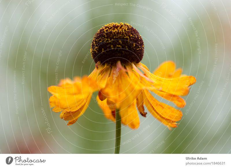 Die Leichtigkeit der Blumen Natur Pflanze Sommer grün Blume gelb Blüte Innenarchitektur Gefühle Herbst Stil Garten Design Park leuchten Dekoration & Verzierung