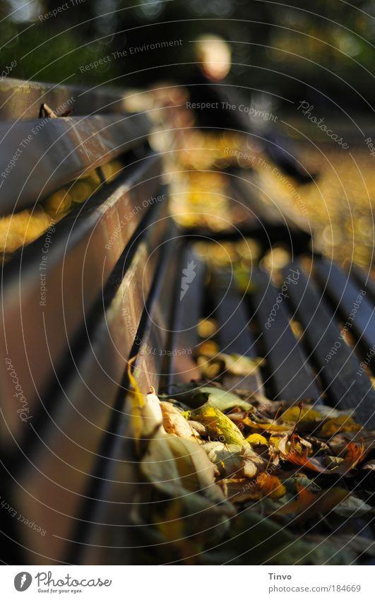 Profil eines Herbsttages Natur alt Blatt ruhig Einsamkeit Erholung Umwelt Herbst Wärme Park sitzen liegen Wandel & Veränderung nachdenklich Trauer Vergänglichkeit