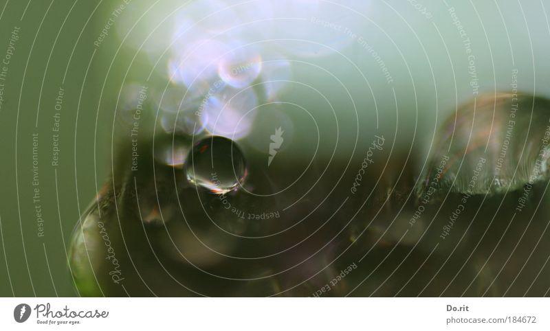 Dr. Mabuses Tropfenkabinett Natur Wasser Blatt kalt Herbst grau träumen Traurigkeit Regen Wassertropfen Unterwasseraufnahme geheimnisvoll Unwetter Unschärfe