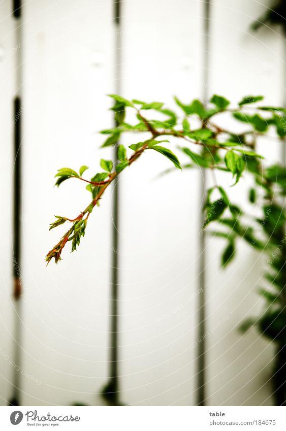 Fühler ausstrecken Farbfoto Nahaufnahme Menschenleer Textfreiraum oben Textfreiraum unten Schwache Tiefenschärfe Garten Gartenarbeit Pflanze Sträucher