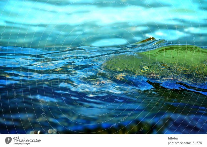 Kaltes Wasser Farbfoto Außenaufnahme Nahaufnahme Experiment Textfreiraum links Tag Licht Gegenlicht Unschärfe Froschperspektive Umwelt Natur Urelemente Sommer
