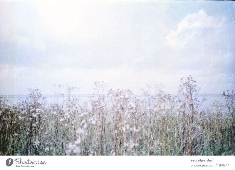 lichtflut Natur Wasser Himmel weiß Pflanze Winter Ferien & Urlaub & Reisen Wolken Ferne Erholung Freiheit Landschaft hell Küste Umwelt Horizont