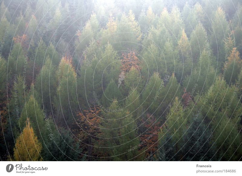 Mischwald1 Farbfoto Außenaufnahme Strukturen & Formen Menschenleer Tag Licht Sonnenlicht Gegenlicht Totale Natur Landschaft Herbst Baum Wald Berge u. Gebirge