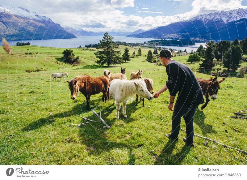 Fütterung Ponys Natur Ferien & Urlaub & Reisen Jugendliche schön Junger Mann Tier Ferne Wald Berge u. Gebirge Leben Lifestyle Freiheit Felsen Ausflug wandern