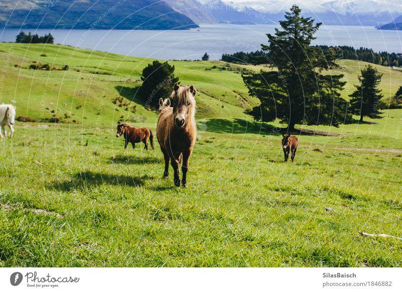 Wild Ponys Tourismus Ausflug Abenteuer Ferne Expedition Sommerurlaub Berge u. Gebirge wandern Natur Landschaft Tier Erde Schönes Wetter Feld Wald Hügel See