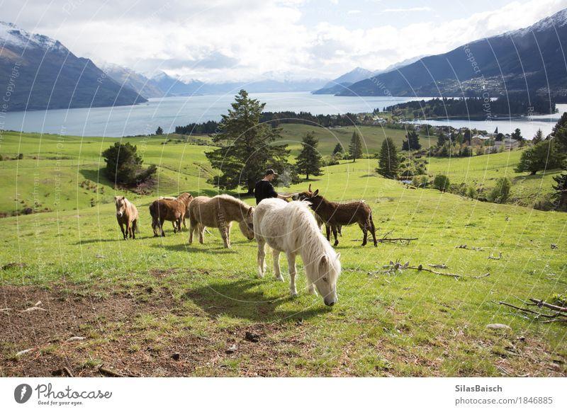 Pony Wellness Ferien & Urlaub & Reisen Abenteuer Ferne Freiheit Berge u. Gebirge Natur Feld Wald Hügel Felsen Alpen Seeufer Dorf Fischerdorf Tier Nutztier