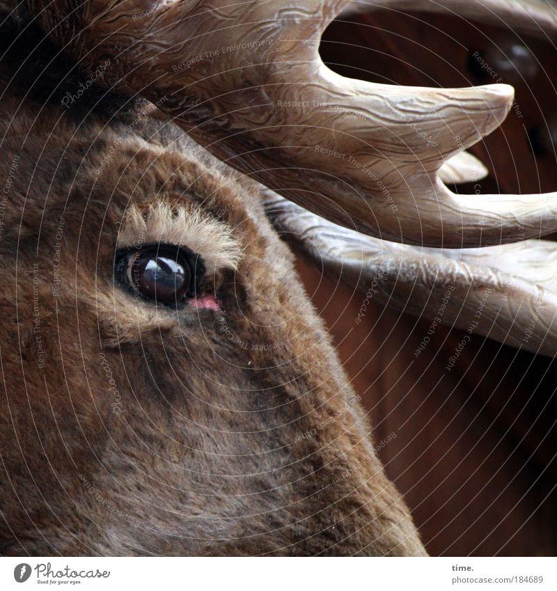 Blue Eyes Elche (Elch) Horn (Geweih) Auge Fell Stoff Blick Traurigkeit Außenaufnahme Augenbraue Imitat Nachbildung braun glänzend Animation Buden u. Stände