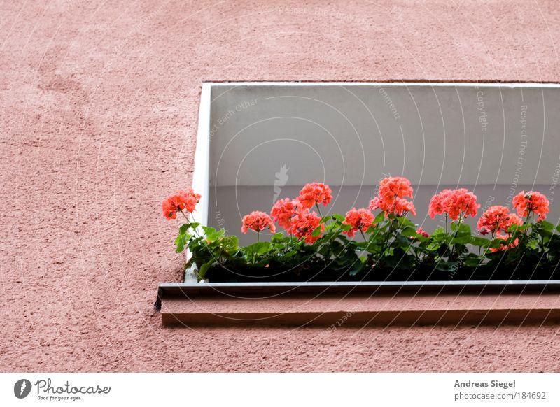 Berliner Sommer Natur schön Pflanze Ferien & Urlaub & Reisen Blume Haus Erholung Architektur Blüte Gebäude Wohnung frisch authentisch Häusliches Leben Balkon