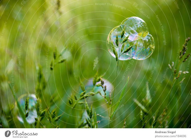 Blasenkuchen Natur schön grün Pflanze Sommer Freude Detailaufnahme Wiese Gras Blase Frühling Stimmung Umwelt Lifestyle Fröhlichkeit