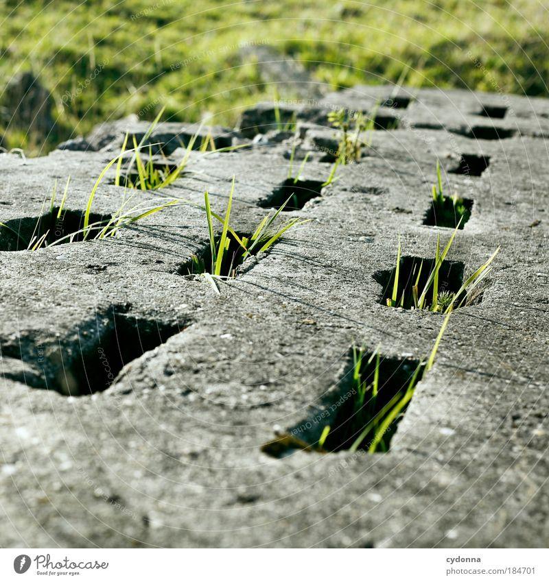 Gras über die Sache wachsen lassen Natur Pflanze Leben Wiese Bewegung Freiheit träumen Umwelt Beton Zeit Perspektive Konzepte & Themen ästhetisch Wachstum
