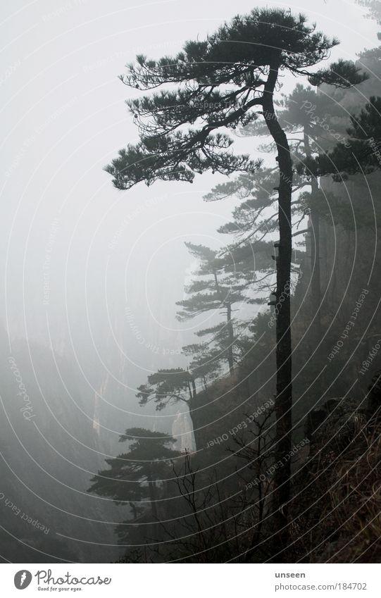morning Natur Baum Pflanze dunkel Erholung Herbst Gras Berge u. Gebirge Landschaft Nebel Felsen Sträucher Tal Nadelbaum Düsterwald