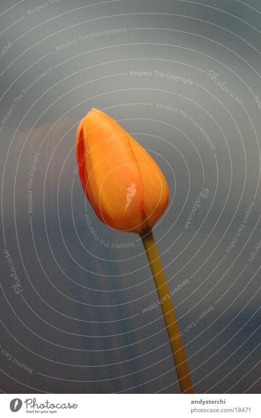 Blume am Himmel blau Pflanze orange Fensterscheibe