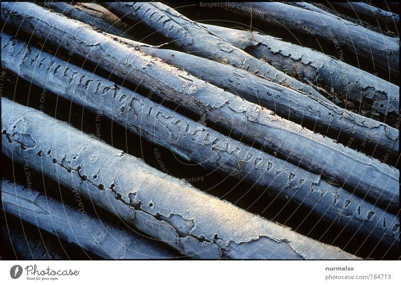Tiefkühlware, Feuerholz Gedeckte Farben Morgen Haus Garten Wohnzimmer Kaminfeuer Natur Winter Eis Frost Baum Linie Streifen liegen kalt Zufriedenheit Klima