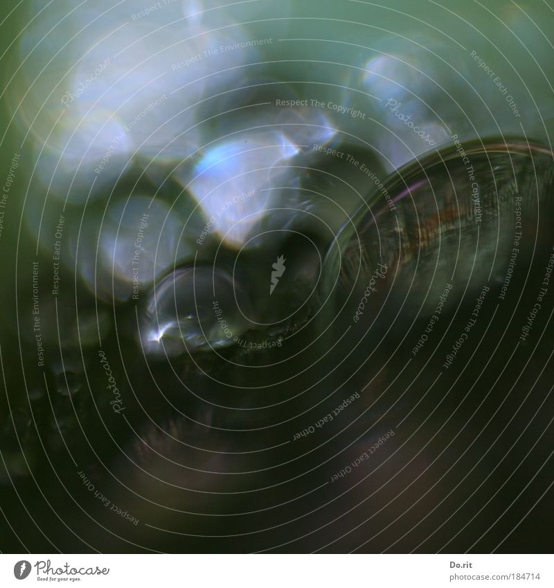 Kryptide oder Igopogo ? Natur grün Blatt kalt Herbst Garten grau träumen Traurigkeit Regen Wassertropfen trist Makroaufnahme Morgen Tropfen