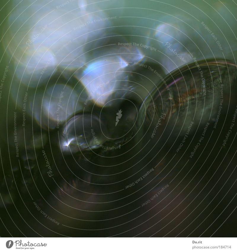 Kryptide oder Igopogo ? Natur grün Blatt kalt Herbst Garten grau träumen Traurigkeit Regen Wassertropfen trist Makroaufnahme Morgen Wasser Tropfen