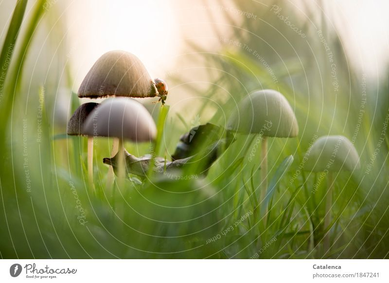 Pilzrand Natur Pflanze grün schön Sonne Tier Herbst Wiese Gras braun Stimmung orange Beginn Wassertropfen beobachten