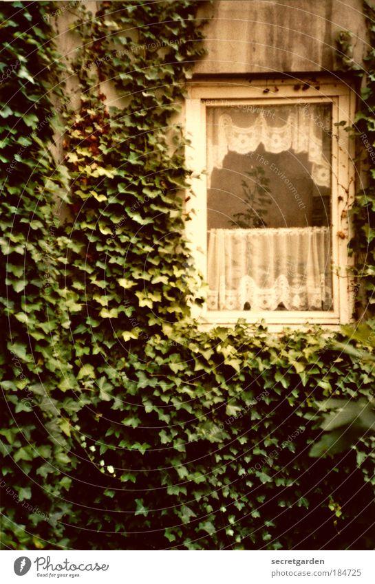 spießige ansichten. Natur alt grün ruhig Einsamkeit Haus Fenster Wand Garten Mauer Traurigkeit dreckig Fassade Armut Wachstum Wandel & Veränderung