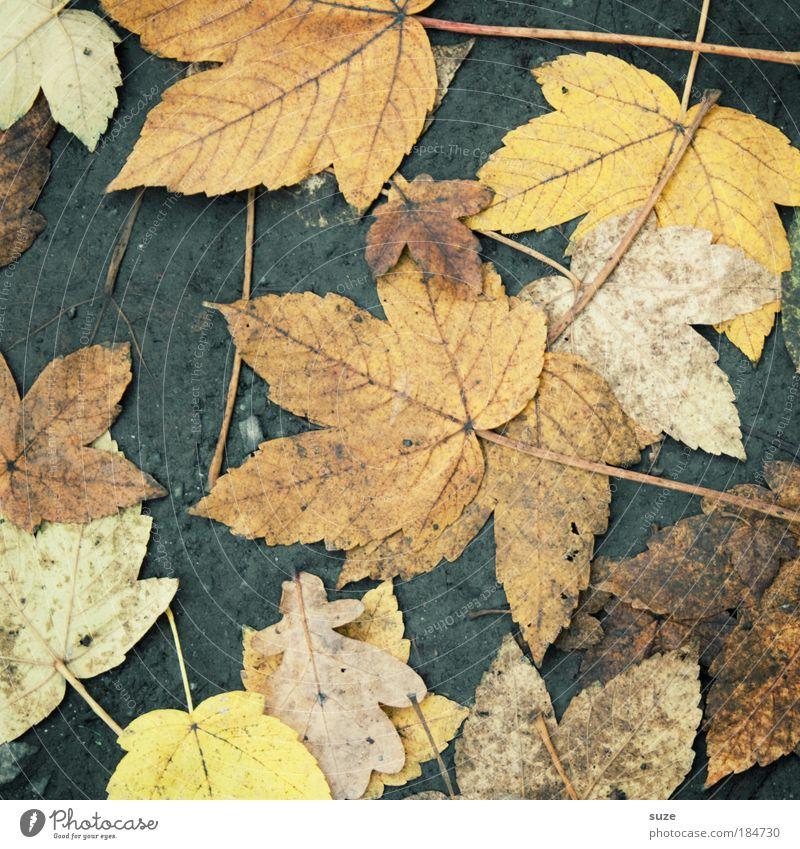 Straßenbelag Umwelt Natur Landschaft Erde Herbst Wetter Blatt Wege & Pfade alt authentisch dreckig Herbstlaub herbstlich Jahreszeiten Bodenbelag Ahorn platt