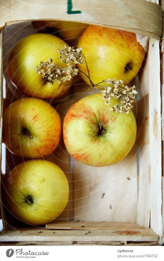 Gesunde Ernährung Natur Leben Herbst Gesundheit Zufriedenheit Frucht Lebensmittel Ernährung Apfel genießen lecker Ernte Wohlgefühl reif Bioprodukte ökologisch