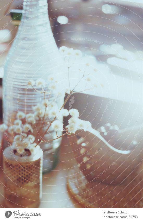 Novemberstillleben mit Ersatz-Weidenkätzchen Flasche Wohnung Dekoration & Verzierung Herbst Pflanze Sträucher Vase Stein Glas ästhetisch Zusammensein Glück hell