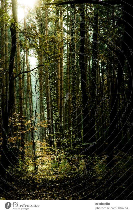 Wald Laubwald Mischwald Baumstamm Ast Zweig Unterholz Forstwirtschaft Märchenwald Licht Waldlichtung Sonne Hoffnung Erkenntnis Romantik Erholung Natur