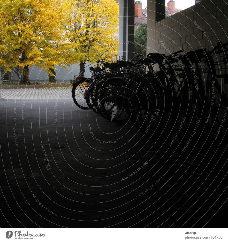 Parkplatz Baum Stadt schwarz gelb dunkel Herbst Wege & Pfade Gebäude Fahrrad Studium Häusliches Leben Personenverkehr Hinterhof Verkehrsmittel