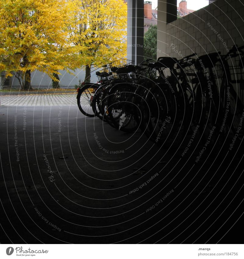 Parkplatz Farbfoto Außenaufnahme Menschenleer Textfreiraum unten Licht Schatten Häusliches Leben Hinterhof Herbst Baum Gebäude Verkehrsmittel Personenverkehr