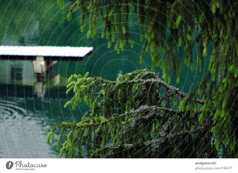 Untersee Wasser Baum kalt See Ast Tanne Steg Teich