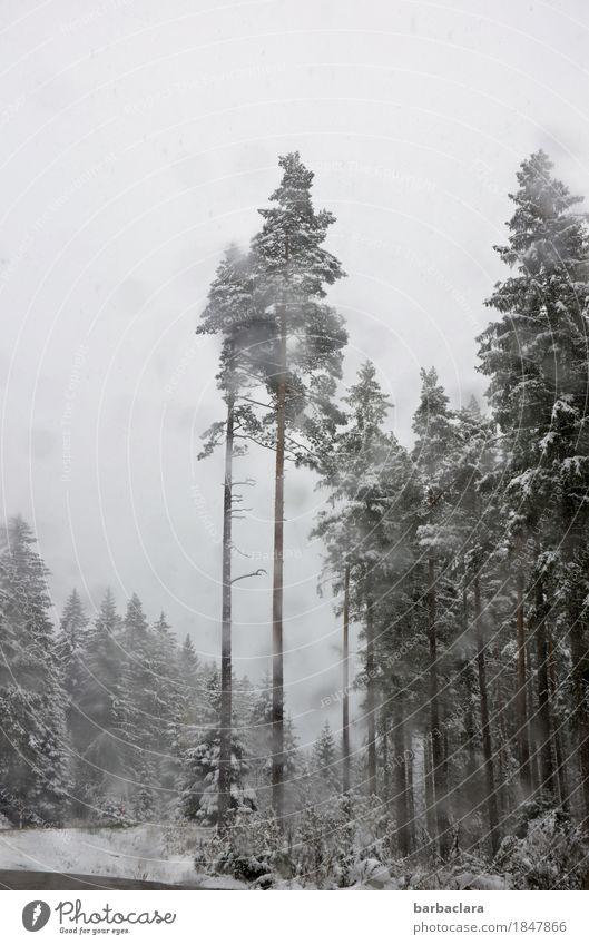 erster Schnee im Schwarzwald Landschaft Urelemente Wassertropfen Himmel Winter Klima Schneefall Wald Autofahren Straße Autofenster Glas grau schwarz weiß