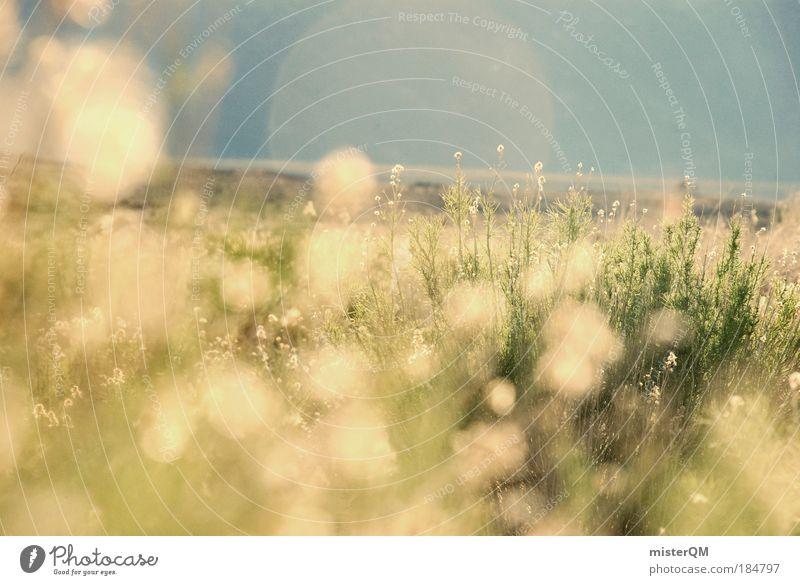 when it was summer. Natur Sommer Leben Wiese Gefühle Traurigkeit Wärme Landschaft Zufriedenheit Feld Stimmung Sonnenuntergang Gegenlicht Hintergrundbild