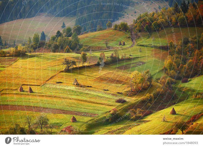 Natur Ferien & Urlaub & Reisen grün schön Baum Landschaft Haus Ferne Wald Berge u. Gebirge gelb Wiese Herbst Gras Garten Freiheit