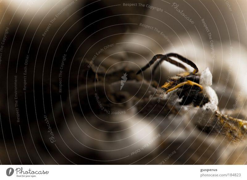waspertine {1} Farbfoto Makroaufnahme Menschenleer Unschärfe Tierporträt Biene Wespen volk fleißig Nest bauen klug diszipliniert Ausdauer