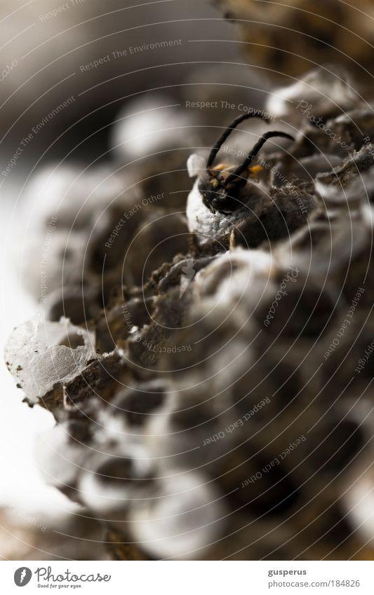 waspertine {3} Farbfoto Makroaufnahme Menschenleer Unschärfe Tierporträt Biene Wespen Völker fleißig Nest bauen rennen klug diszipliniert Ausdauer