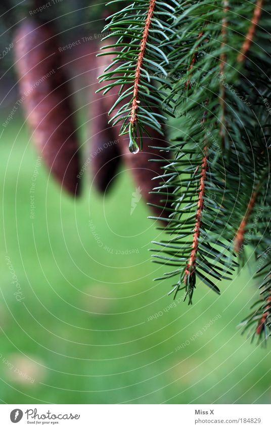 Im Wald Natur grün Pflanze Sommer Baum kalt Umwelt Herbst Regen Wetter Park Klima frisch nass Ausflug Weihnachtsbaum