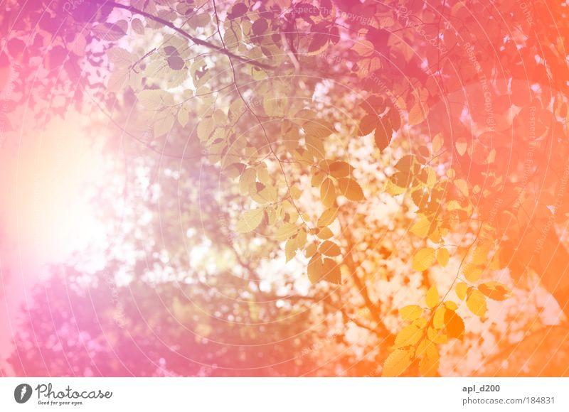 Farbwald Himmel Natur weiß Baum Pflanze rot Sonne Freude Sommer Ferien & Urlaub & Reisen Blatt Wald gelb Umwelt Glück Freizeit & Hobby