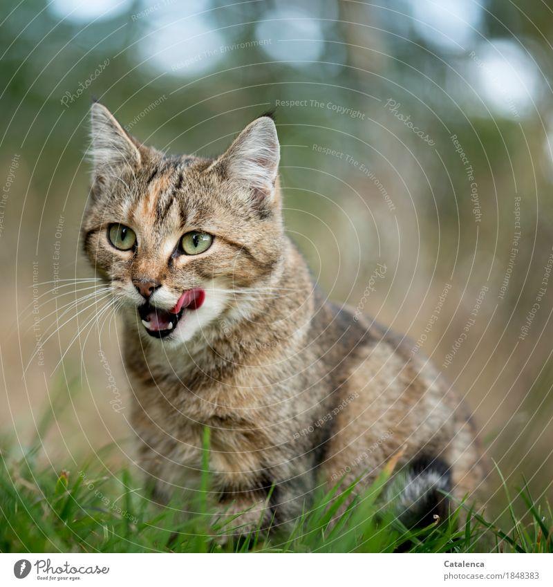 Hunger Katze Himmel Natur Pflanze blau Sommer schön grün Tier Leben Wiese Gras braun rosa ästhetisch beobachten